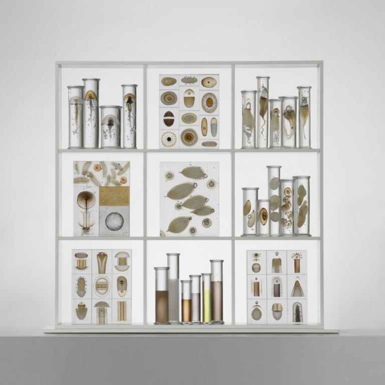 1-ny-Cabinet-of-curiosities--201